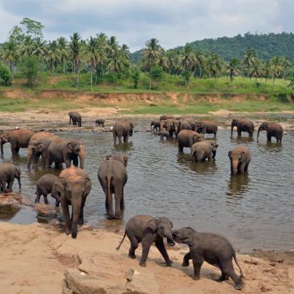 Voyage au Sri Lanka : Découverte et Plages
