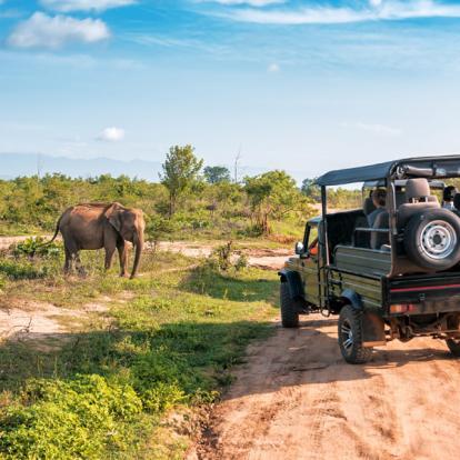 Circuit au Sri Lanka : Fascinant Sri Lanka