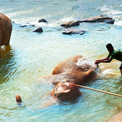 Circuit au Sri Lanka : Sensations