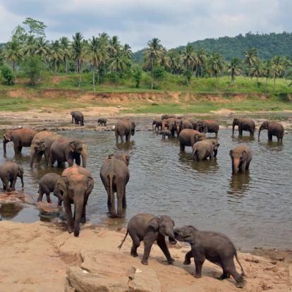 Circuit au Sri Lanka : Retour sur le Sri Lanka Colonial