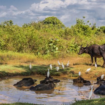 Voyage au Sri Lanka : Trésors naturel du Sri Lanka