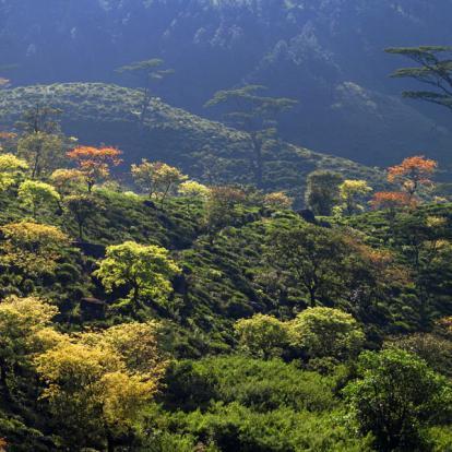 Circuit au Sri Lanka : Trésors naturel du Sri Lanka