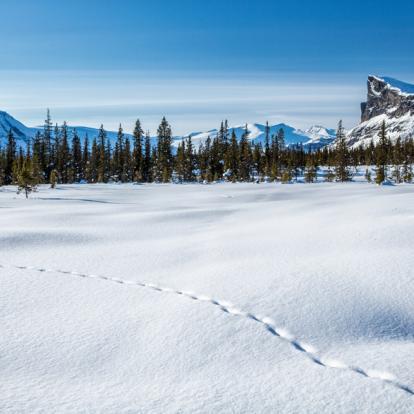Circuit en Suède: Trek d'hiver dans le parc National de Sarek