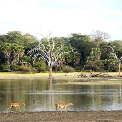 Voyage en Tanzanie : Terre et mer, Géants de Tanzanie