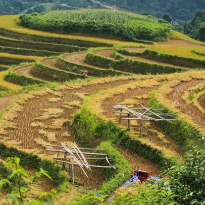 Voyage au Vietnam : Haute Région et Baie d'Halong