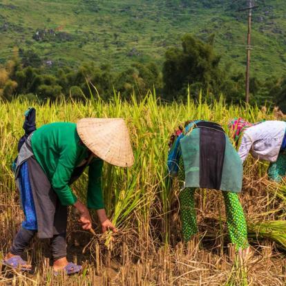 Circuit au Vietnam : De la Frontière Chinoise au Delta du Mékong