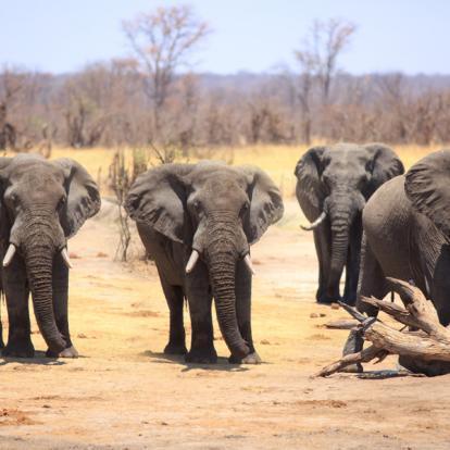 Circuit en Zambie : Afrique Mémorable