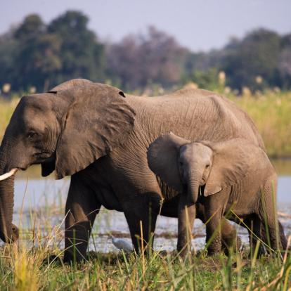 Circuit en Zambie : Zambezi de Charme