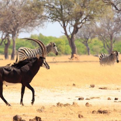 Circuit au Zimbabwe : Best of du Zimbabwe