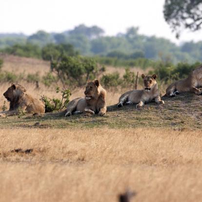 Voyage au Zimbabwe : Voyage entre amis « Des Safaris Autrement »