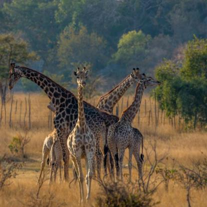 Voyage au Zimbabwe : Le Zimbabwe en Famille