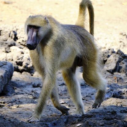 Voyage au Zimbabwe : Safaris Aficionados