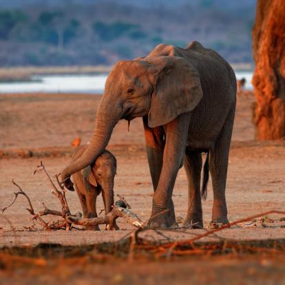 Circuit au Zimbabwe : Safaris Aficionados