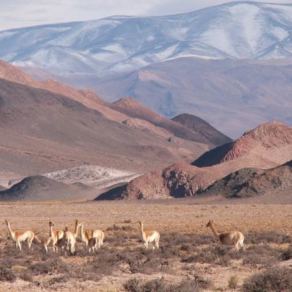 Voyage en Argentine : Traversée de la Cordillère des Andes