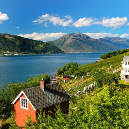 Circuit en Norvège : Au Fil des Fjords