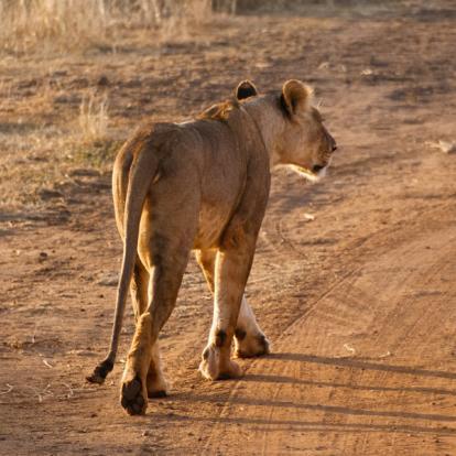 Kenya : A la découverte des Parcs Kenyans