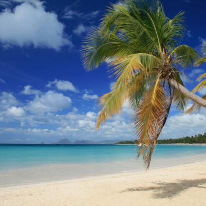 Circuit en Martinique: Combiné de Rêve en Martinique et aux Grenadines