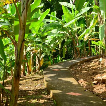 Voyage en Martinique: Route du Rhum du Sud au Nord