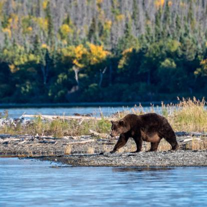 Circuit en Alaska - Destination Grand Ouest et Alaska