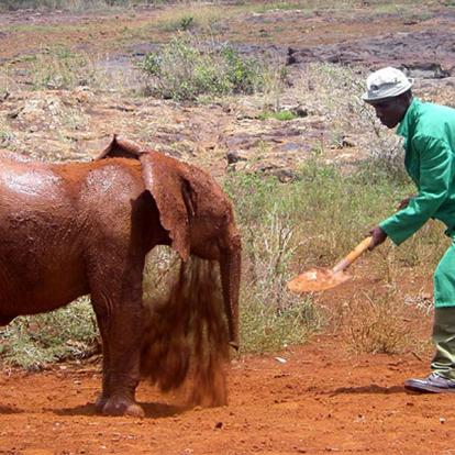 Kenya : Ecovolontariat à Muringa Farm - Subukia