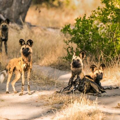 Circuit au Botswana : Okamana, Okavango à Mana Pools
