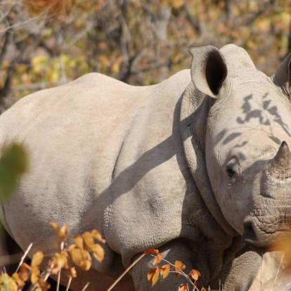 Voyage en Afrique du Sud - Du Kruger au Mozambique