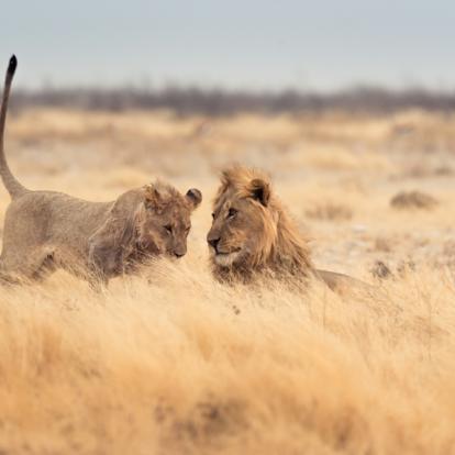 Safari en Afrique du Sud - Du Kruger au Mozambique