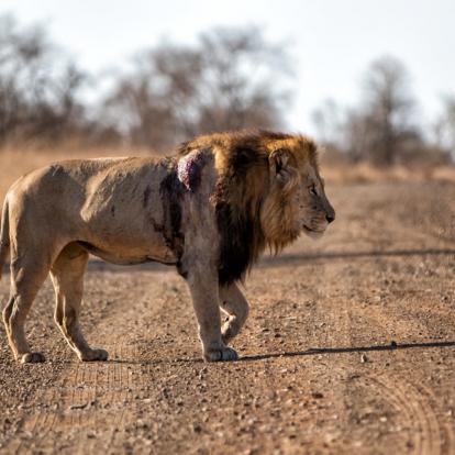 Voyage en Afrique du Sud - Le Trekker