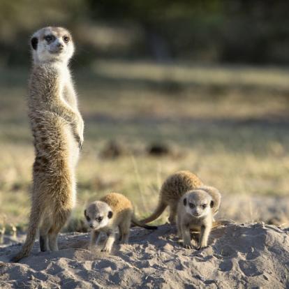 Voyage en Afrique du Sud - Safari à pied dans le Parc Kruger