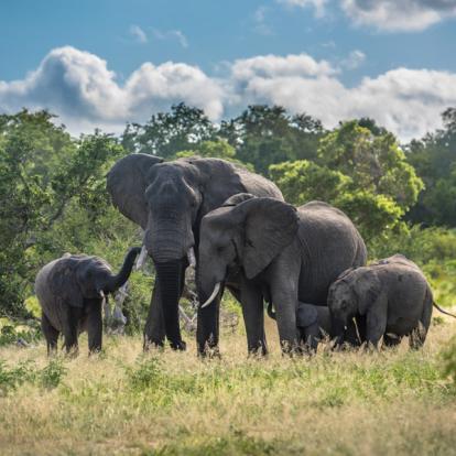 Voyage en Afrique du Sud - afari à pied dans le Parc Kruger