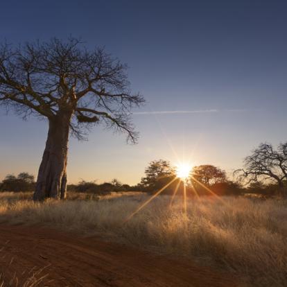 Circuit en Afrique du Sud - Safari à pied dans le Parc Kruger
