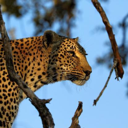 Circuit en Afrique du Sud - afari à pied dans le Parc Kruger