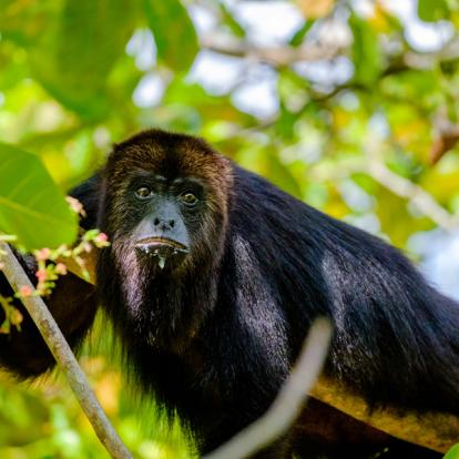 Voyage au Belize - Entre Aventure et Incontournables