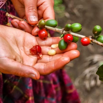 Voyage au Guatemala - Voyage en famille autour du Guatemala