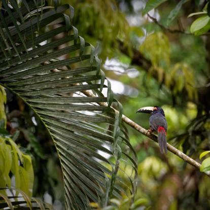 Voyage au Belize - Faune et flore sauvage du Belize
