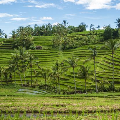 Circuit en Indonésie - De Singapour à Bali, les contrastes de l'Asie