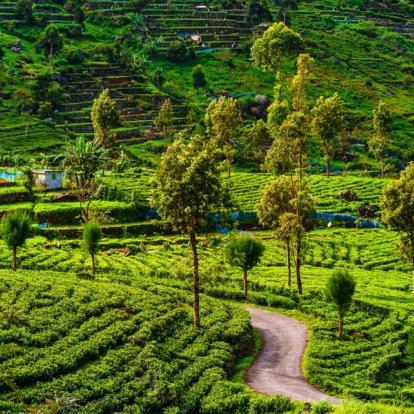 Circuit au Sri Lanka - Les Classiques du Sri Lanka en été