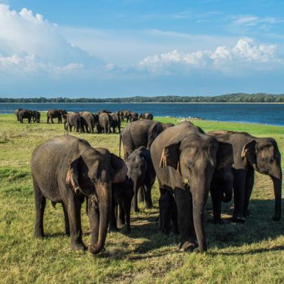 Voyage au Sri Lanka - Les Classiques du Sri Lanka en été