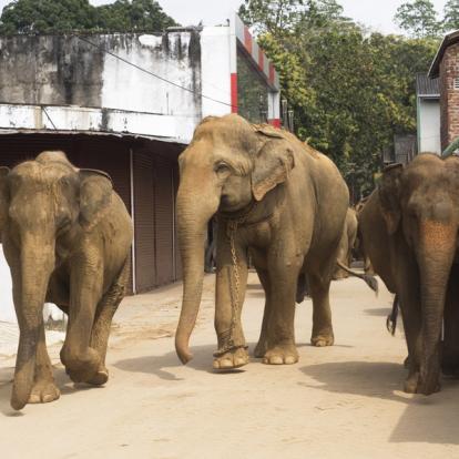 Circuit au Sri Lanka - L'hiver en famille