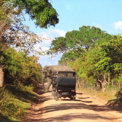 Voyage au Sri Lanka - Chic et Charme Sri Lankais