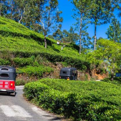 Circuit au Sri Lanka - Chic et Charme Sri Lankais