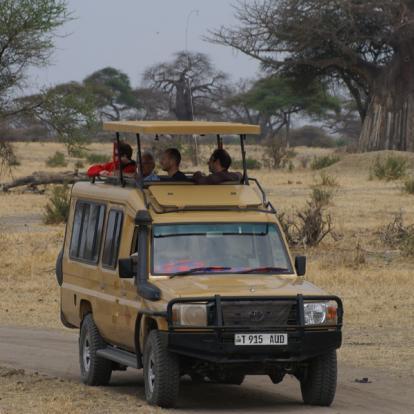 Safari en Tanzanie - Le nord et Zanzibar