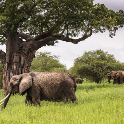 Voyage en Tanzanie - Kilimandjaro et safari