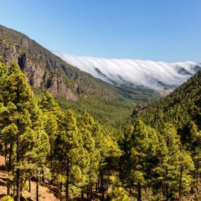 Circuit aux Canaries - La Palma en Liberté