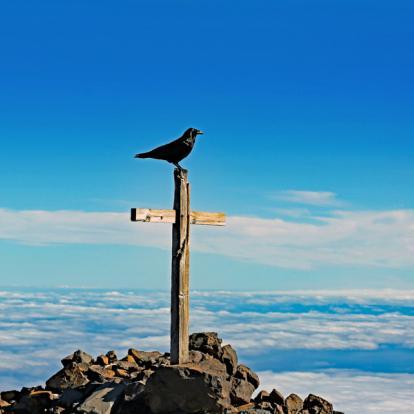 Voyage aux Canaries - La Palma en Liberté