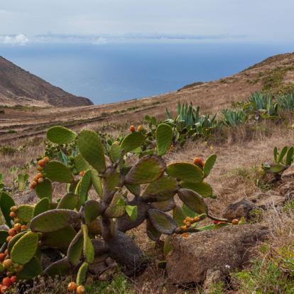 Circuit aux Canaries - Tenerife, la Gomera et la Palma en liberté