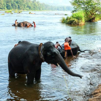 Voyage en Inde - En famille sur la piste des éléphants