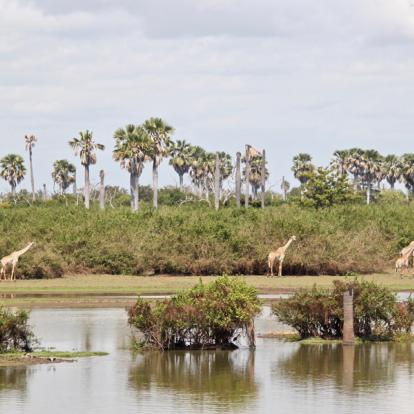 Voyage en Tanzanie - Terre sauvage et île secrète