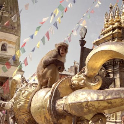 Circuit au Népal - Rencontres et trek en Annapurna
