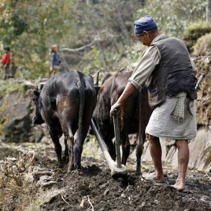 Voyage au Népal - Rencontres et trek en Annapurna